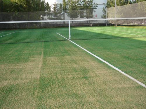 Так выглядит издалека теннисный корт, засыпанный травой.